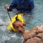 Bentley swimming