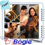 Bogie, Terrier Mix