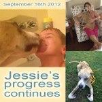 Jessie, Boxer-Shepherd mix - Medical Animals In Need (17)