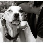 Jessie, Boxer-Shepherd mix - Medical Animals In Need (29)