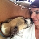 Jessie, Boxer-Shepherd mix - Medical Animals In Need (37)