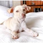 Inspirational Pups of 2012: Fonzie