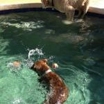 Nala loves to swim!