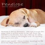 Penelope-Web