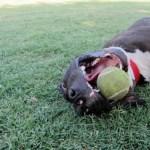 Tennis ball!