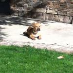 Macy sunbathing