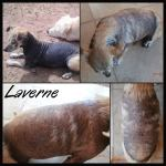 Laverne's new fur! July 18th