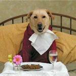 dogfood
