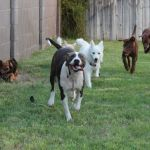 Chopper, Julienne and Perry at PLAY!