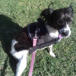 Hope's special harness