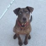 Julienne's begging for treats face