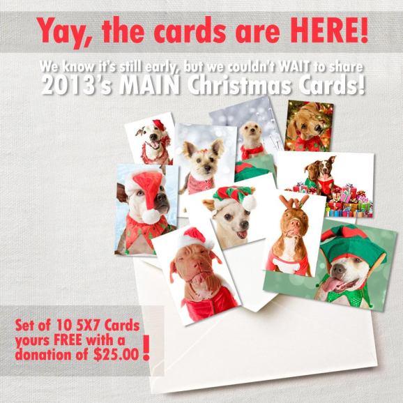 Xmas Cards!