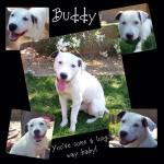 Buddy- looking good!