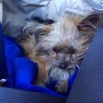 Alvin, rescued!