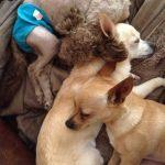 Millie loves her foster siblings!