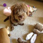 Millie's new toys!