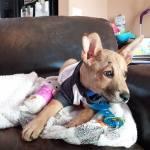 Jasper living the life in foster