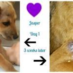 Jasper's wound healing