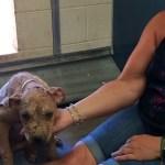 Piper's rescue2
