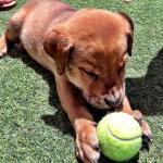Boomer and his ball