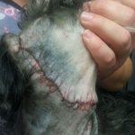 Drifter's stitches