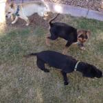 Farley meeting his foster siblings