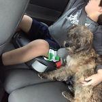 Skeeter loves to cuddle