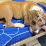 Otis first vet visit