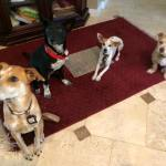 BAxter with his foster pack