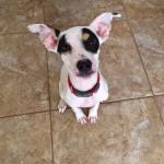Elliot says please adopt me!