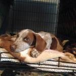 Spencer, safe in foster