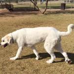 Oscar at the park