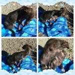 Arabella at rescue, in foster