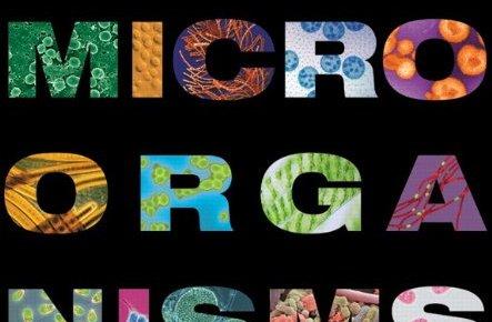 Brock Biology of Microorganisms 14th Edition PDF
