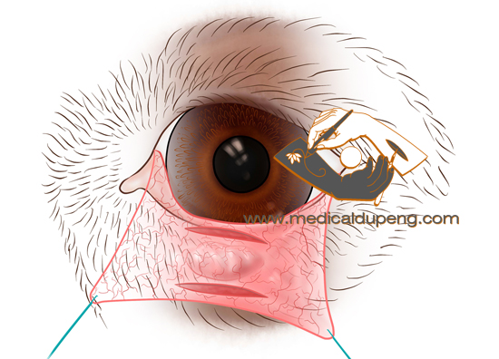Drawing the dog's eye operation