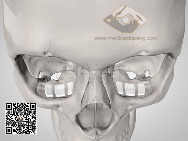 Skull_with_e-PTFE_HDRStudioRig02-watermarked