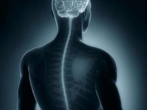 вирусная инфекция, головной мозг