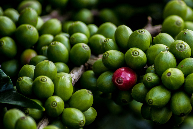 зеленое кофе