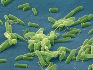 Микробиом: как он влияет на наше здоровье?