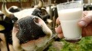сырое молоко, заболевания пищеварительного тракта