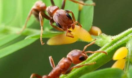 JS07, JS07, лечение, раковые клетки, крапива, муравьи