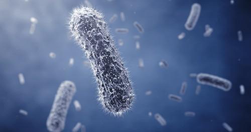 ген, бактерии