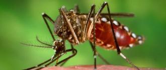 Лихорадка денге, комары