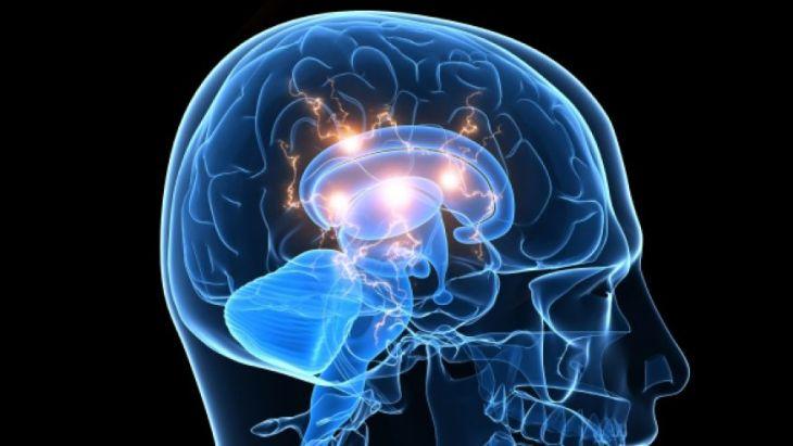 ген, шизофрения, головной мозг