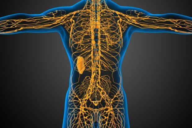 лимфатическая система, головной мозг