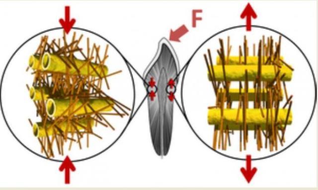 дентин, наноструктура