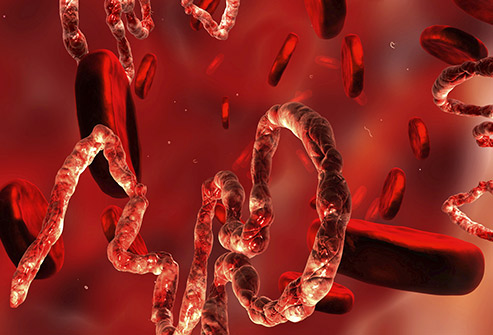 анализ крови, вирус Эбола