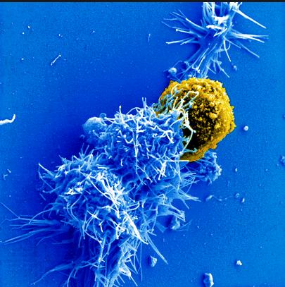 микрофлора, аллергия