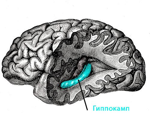 гиппокамп, депрессия