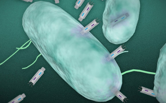 phagemids, Фагмиды, бактерии, бактериофаги